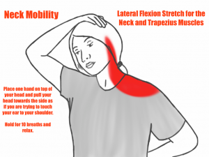 Neck Mobility - Lateral Flexion Stretch for the Neck and Trapezius Muscles