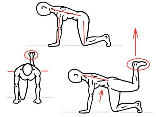 Quadruped Hip Extension
