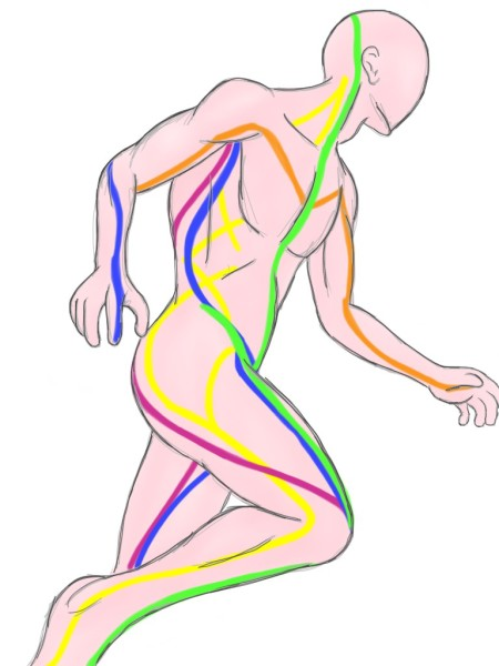 Soft Tissue Therapy - Illustration of Anatomy Trains