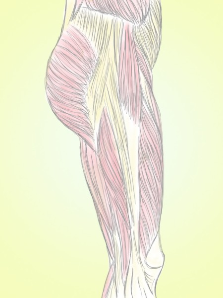 Soft Tissue Therapy - Striations in the Tissues - Hips - Quads - Hamstring1