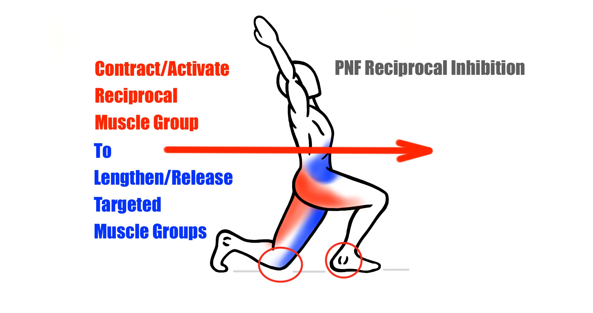 Stretching - PNF Stretching Technique - Reciprocal Inhibition - Contract and Hold