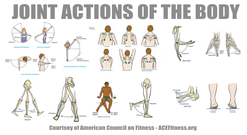 Anatonmy - Joint Actions of the Body via www.acefitness.org