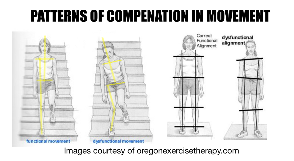Synergisitic Training - Examples of Compensation in Movement via www.oregonexercisetherapy.com