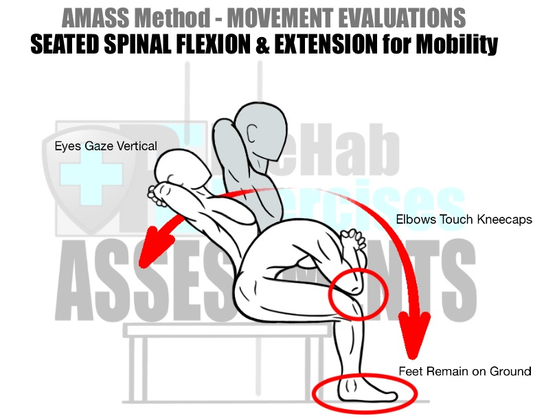 prehab-exercises-amass-method-movement-evaluations-for-running-seated-spinal-flexion-and-extension-for-mobility
